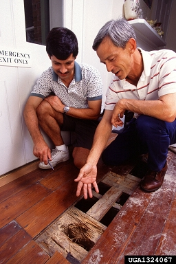 Termite damage, Scott Bauer, USDA Agricultural Research Service, Bugwood.org