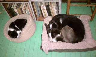 Our pets Sylvester and Nash