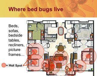 Where bed bugs are likely to hide
