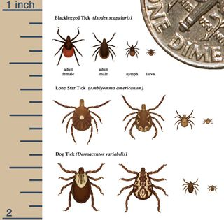 Tick sizes from CDC